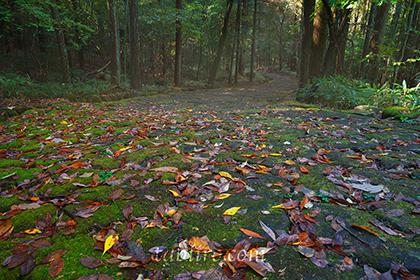 2015,11,03中山道落合の石畳042a.jpg
