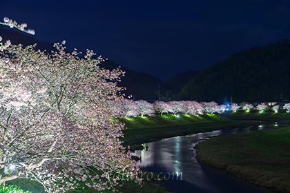 2016,02,15みなみの桜ライトアップ041a.jpg