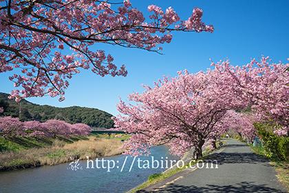 2016,02,16みなみの桜088a.jpg