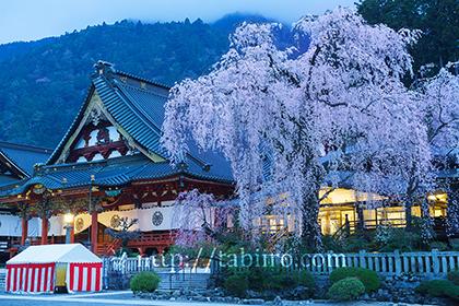 2016,04,03身延山久遠寺のシダレザクラ023 のコピー.jpg