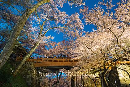 2016,04,09高遠城址公園桜雲橋の夜景078a.jpg