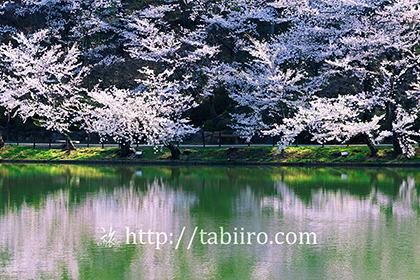 2016,04,12臥竜公園022b.jpg