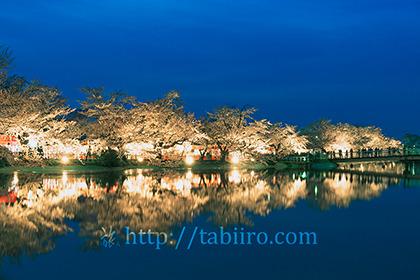 2016,04,12臥竜公園の夜桜039 b.jpg