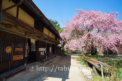 2016,04,19一石栃の立場茶屋007a.jpg