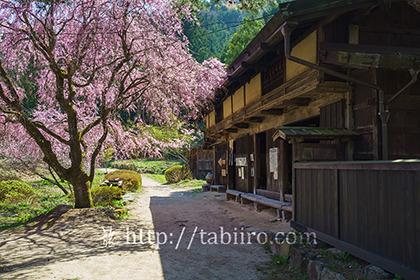 2016,04,20一石栃の立場茶屋043a.jpg