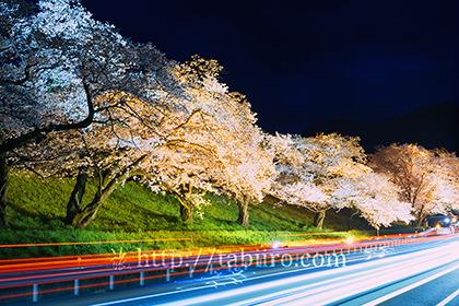 2017,04,08国道52号線と桜並木004a.jpg