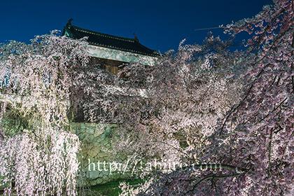 2017,04,12上田城北櫓の夜桜012a.jpg