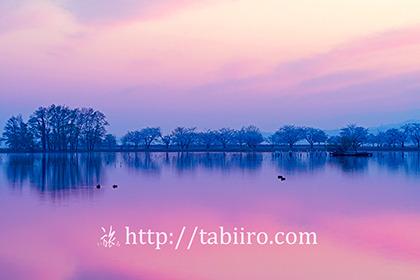 2017,04,17早朝の瓢湖015a.jpg