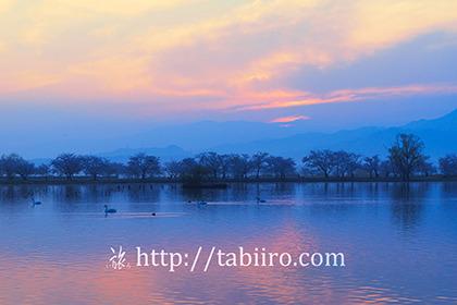 2017,04,17早朝の瓢湖098a.jpg