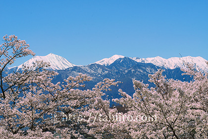 2017,04,18明科方面より桜越しに常念岳を望む024a.jpg