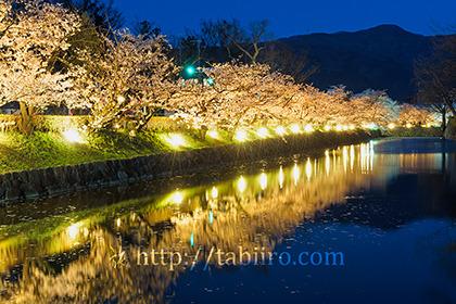 2017,04,18松本城桜並木光の回廊015a.jpg