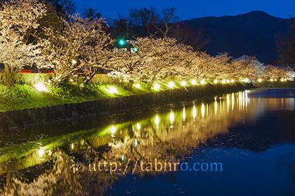 2017,04,18松本城桜並木光の回廊018a.jpg