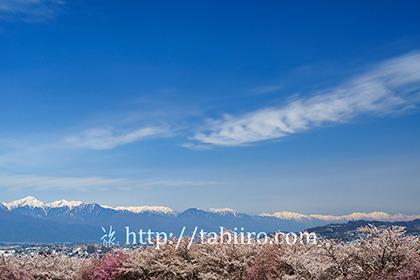 2017,04,20弘法山古墳より桜越しに北アルプスを望む192a.jpg