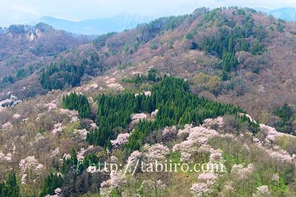 2017,04,21陸郷桜仙峡001a.jpg