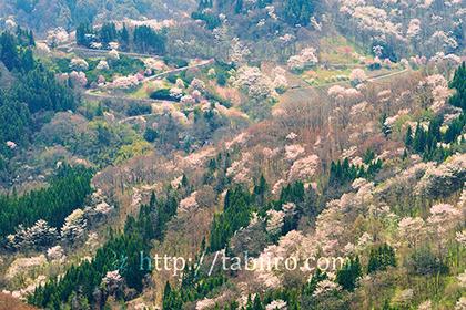 2017,04,22陸郷桜仙峡142a.jpg