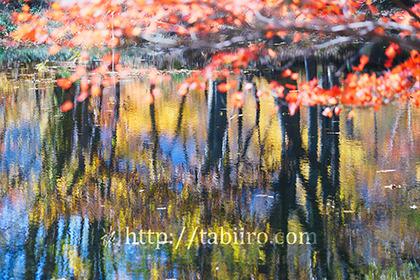 2017,11,03秋山郷天池水面の紅葉069a.jpg
