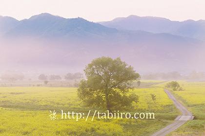 2019,05,12千曲川の菜の花畑009B.jpg