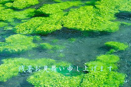 2019,08,16安曇野の清流043B.jpg