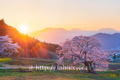 2021,04,19高山村エドヒガンザクラの夕景119b.jpg