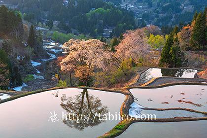 2021,04,21桜咲く儀明の棚田の夕景021b.jpg