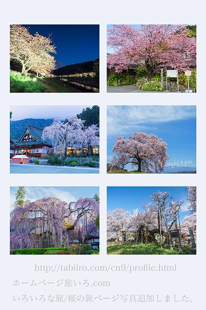 桜の旅01.jpg