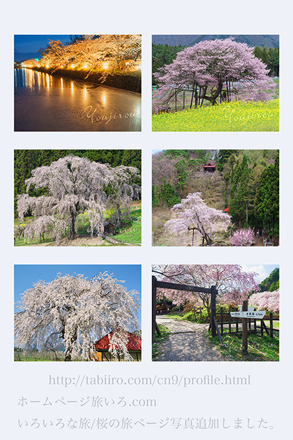 桜の旅02.jpg